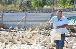 Ördek çiftliği taleplere yetişemiyor