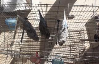 Yangından etkilenen 3 kuşu itfaiye kurtardı