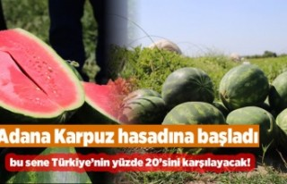 Adana karpuz hasadına başladı, yılda 1 milyon...