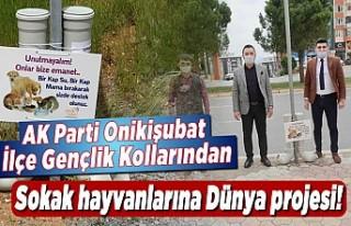 AK Parti Onikişubat Gençlik Kollarından sokak hayvanlarına...