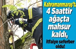 Kahramanmaraş'ta 4 saatir ağaçta mahsur kaldı!...