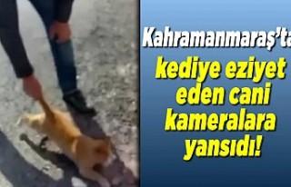 Kahramanmaraş'ta kediye eziyet eden cani kameralara...