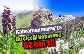Kahramanmaraş'ta bu çiçeği koparana 62 bin...