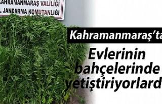Kahramanmaraş'ta evlerinin bahçesinde yetiştiriyorlardı!