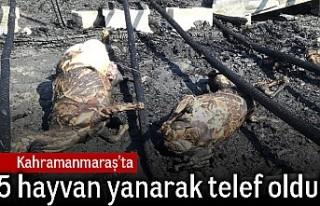 Kahramanmaraş'ta 5 hayvan yanarak telef oldu!