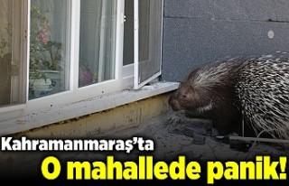 Kahramanmaraş'ta o mahallede panik!