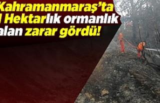 Kahramanmaraş'ta 1 hektar ormanlık alan zarar...
