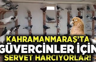 Kahramanmaraş'ta güvercinler için servet harcıyorlar...