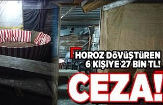 Horoz dövüştüren 6 kişiye 27 bin TL ceza!