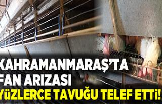 Kahramanmaraş'ta fan arızası yüzlerce tavuğu...