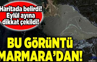 İTÜ'den 'müsilaj' haritası! Marmara...