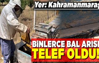 Kahramanmaraş'ta binlerce bal arısı telef oldu!