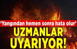 Orman yangını sonrası fidan dikmek neden doğru...