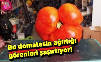 Bu domatesin ağırlığı görenleri şaşırtıyor!