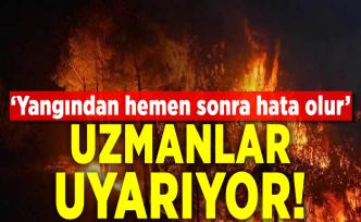 Orman yangını sonrası fidan dikmek neden doğru bir davranış değil?