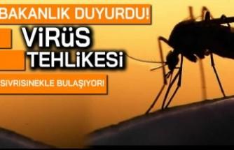 Bakanlık duyurdu! Virüs tehlikesi! Sivri sinekle bulaşıyor...