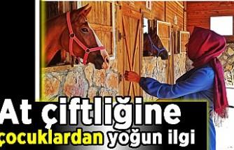 At çiftliğine çocuklardan yoğun ilgi