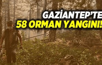 Gaziantep'te 58 orman yangını!