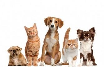 Hızlı ve Güvenilir Evcil Hayvan Satışı