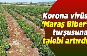 Korona virüs 'Maraş Biber' turşusuna talebi artırdı