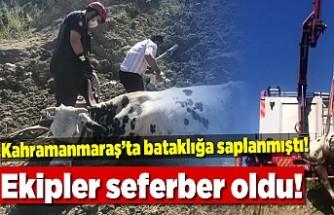 Kahramanmaraş'ta bataklığa saplanmıştı, ekipler seferber oldu!