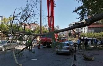 İstanbul'da şiddetli fırtına ağaçları devirdi