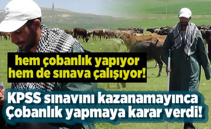 KPSS sınavını kazanamayınca çobanlık yapmaya karar verdi!