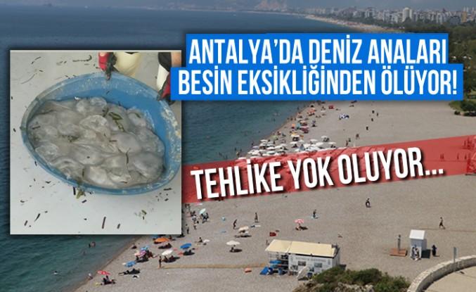 Antalya'da deniz anaları besin eksikliğinden ölüyor!