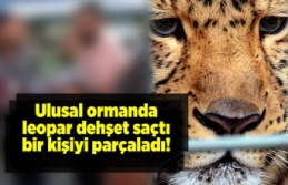 Ulusal ormanda leopar dehşet saçtı, bir kişiyi...