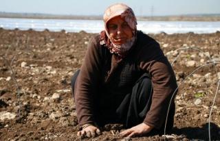 Tarım işçisi kadınlar dertli!