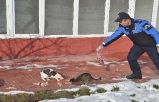 Sokak hayvanları için doğaya yem bıraktılar