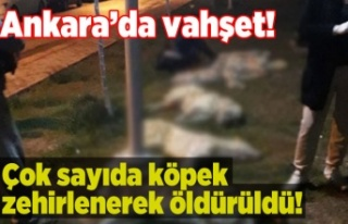 Ankara'da masumlara yapılan insanlık dışı...
