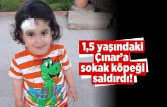 1,5 yaşındaki Çınar'a sokak köpeği saldırdı!