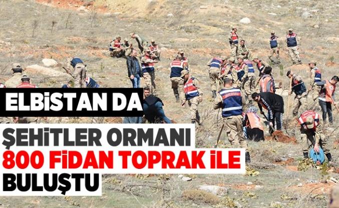 Kahramanmaraş'ın Elbistan ilçesinde 800 fidan toprak ile buluştu